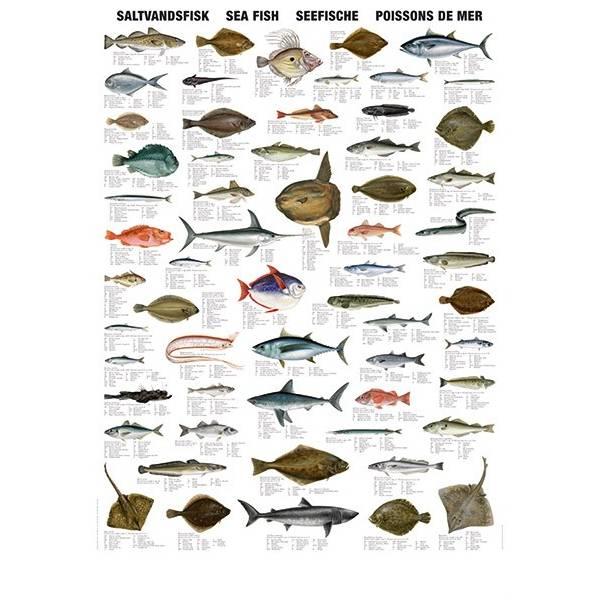 poissons de mer turtle prod plong e posters chez scubazar. Black Bedroom Furniture Sets. Home Design Ideas